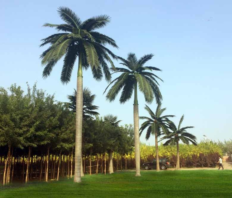 Outdoor artificial royal coconut palm