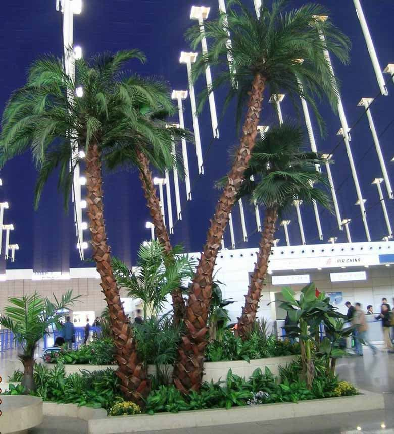 Two groups of preserved date palm for Sichuan Train Station